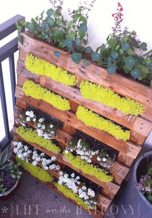 Pallet Container Garden